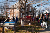 Visitors enjoyed the live nativity scene and animals