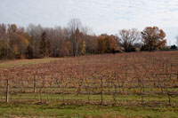 Late fall at the Vineyards
