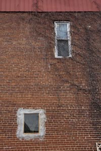 Old bricks, old vines, new window
